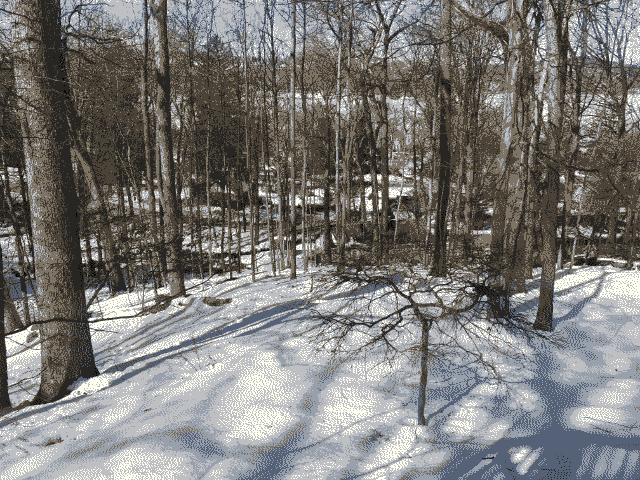 Snow-covered ground and trees just outside my parent's place.